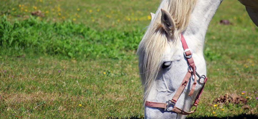 horse-1753383_1280