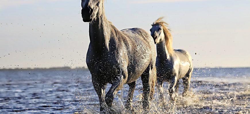 horse-1542480_1280