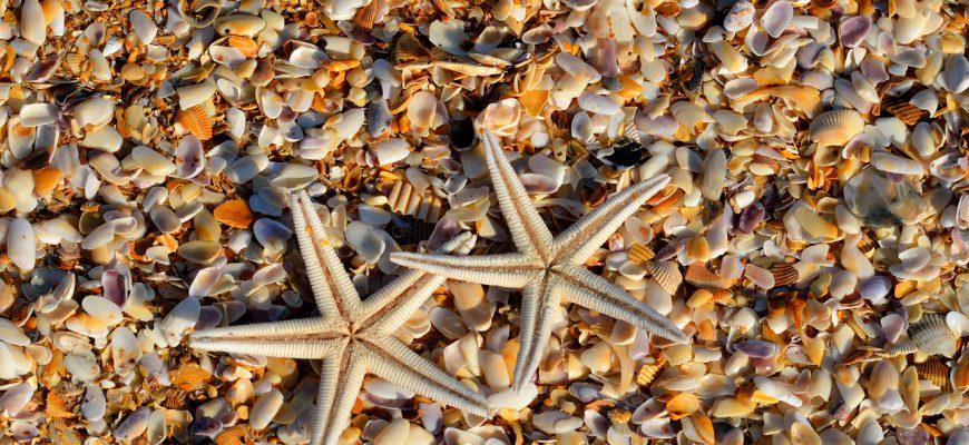 starfish-1572797_1280