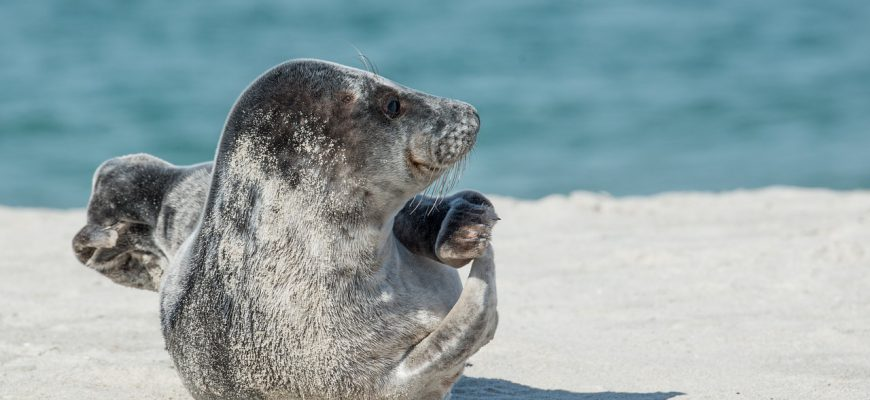 grey-seal-2164736_1280