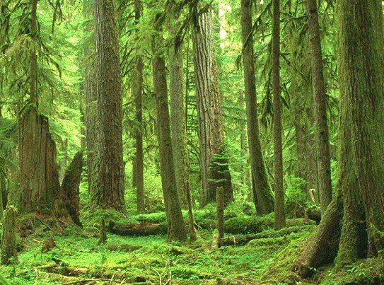 foresta_0